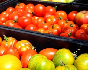 tomatoes local farm nj