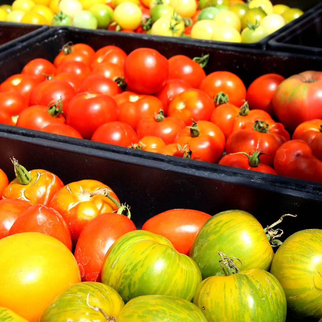 tomatoes local farm nj