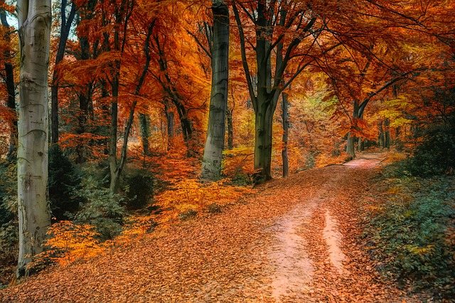 autumn leaves roadway